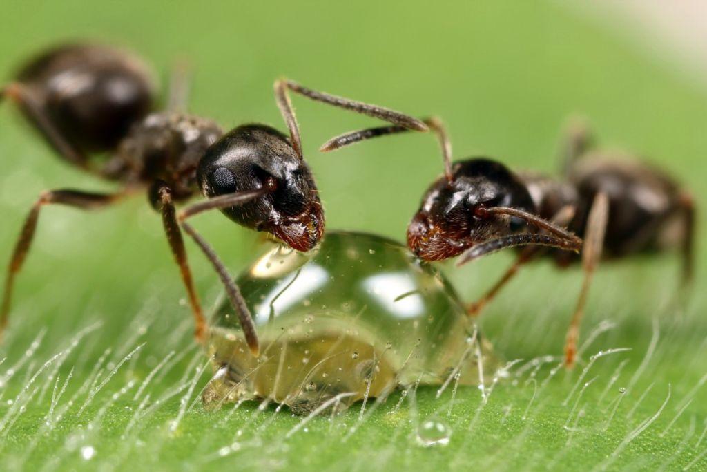 В Севастополе откроют гигантский прозрачный муравейник