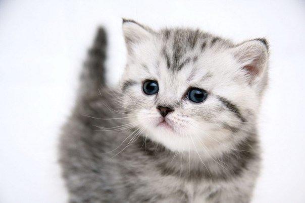 У вас появился котенок – правила и советы по уходу